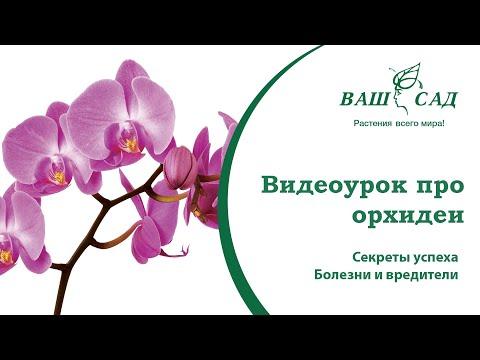 Видеоурок: Орхидея. Секреты успеха. Болезни и вредители. Ваш сад