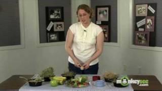 Rabbit Care - Choosing the Proper Diet for your Rabbit
