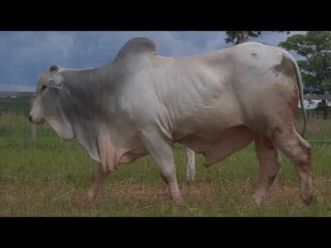 LOTE 070   GPO A 3390