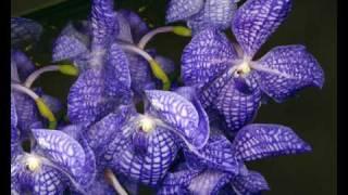 flowers - Nana Mouskouri - La Violetera.wmv