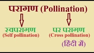 Pollination and its types (Self and Cross pollination) in hindi
