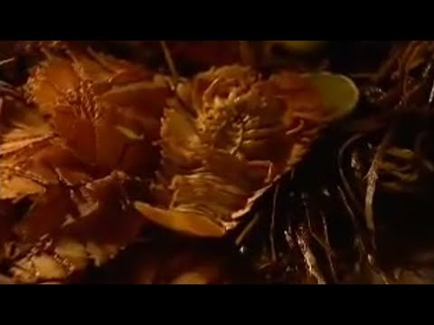 Try Morton Bay bugs - Food to eat before you die  - BBC