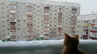 Кот впервые увидел снежинки