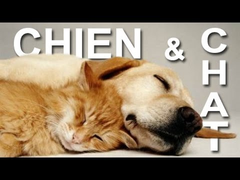 chien et chat parole de chat youtube. Black Bedroom Furniture Sets. Home Design Ideas