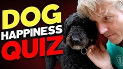 Is your dog happy or sad? Take the Test!