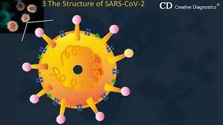2019 Novel Coronavirus - SARS CoV 2