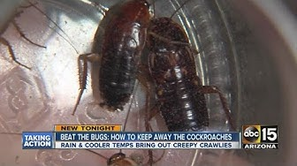 Beat the bugs: How to keep away cockroaches