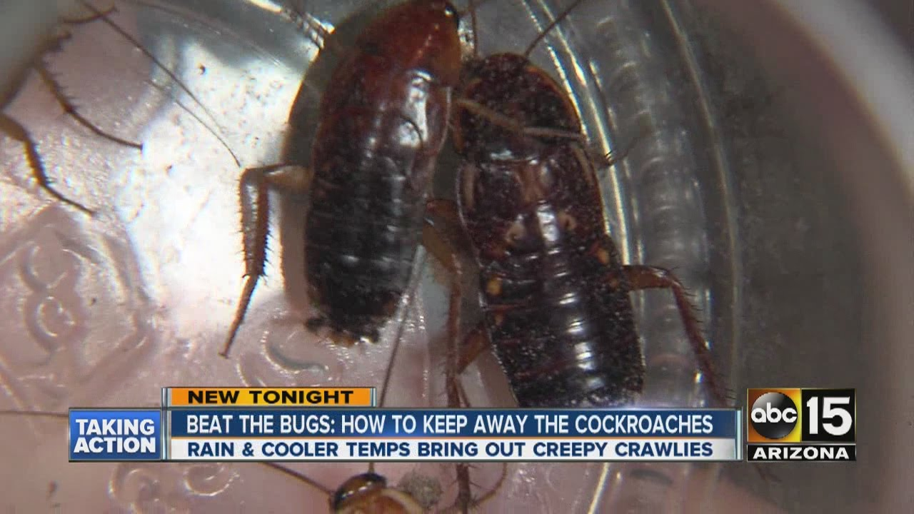 Beat The Bugs How To Keep Away Cockroaches Youtube