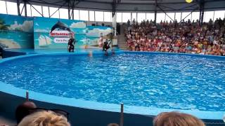 Сочи парк Дельфинарий(, 2015-07-06T08:05:22.000Z)