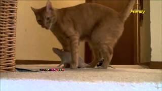 Невероятная дружба кошки и крысы