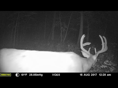 One year of deer trail camera photos - Part 1