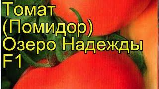 Томат обыкновенный Озеро Надежды Ф1. Краткий обзор описание характеристик где купить семена