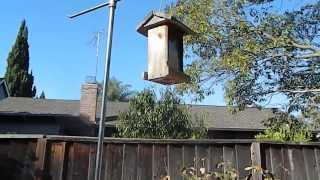 Actual Squirrel Proof Bird Feeder