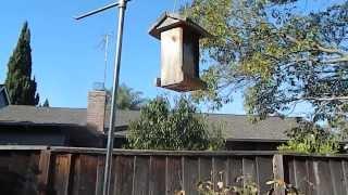 Actual Squirrel Proof Bird Feeder