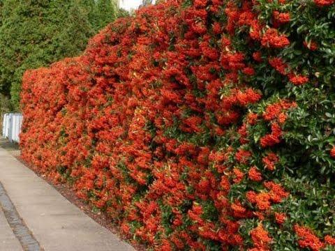 8 способов  как  украсить забор из рабицы