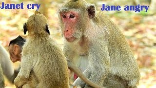 Deeply Cry! Jane bites Janet to chase away very strong, Janet cry so loud, Jane angry Janet
