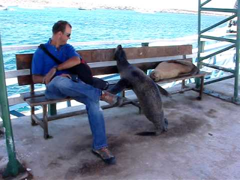Galapagos Sea Lion Wants Seat On Bench Youtube