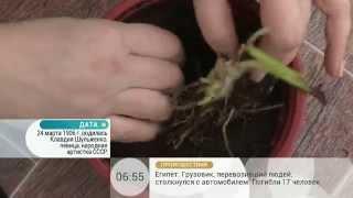 Как хранить луковицы растений до посадки(, 2014-05-07T11:11:57.000Z)