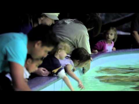 Thumbnail: Wildlife World Zoo and Aquarium