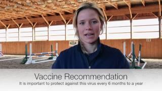 Equine Vaccinations Flu Rhino