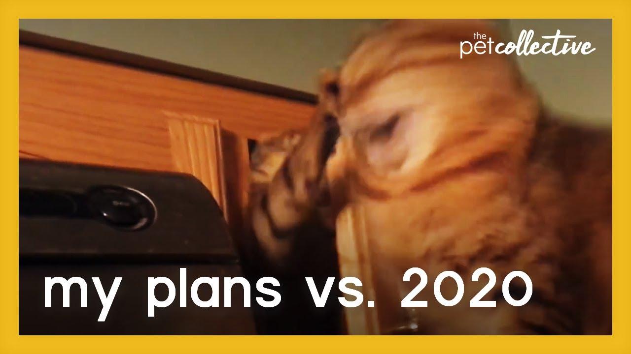 My plans vs 2020