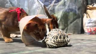 萬田さんとカメ星亀のカメです。