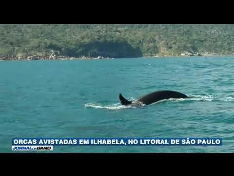 SP: Orcas São Avistadas Em Ilhabela