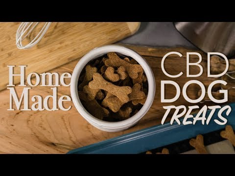 how-to-make-cbd-for-pets-|-homemade-cbd-dog-treats