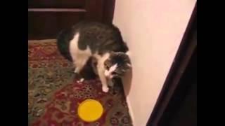 Говорящий кот...потрясение..уйди-уйди-уйди