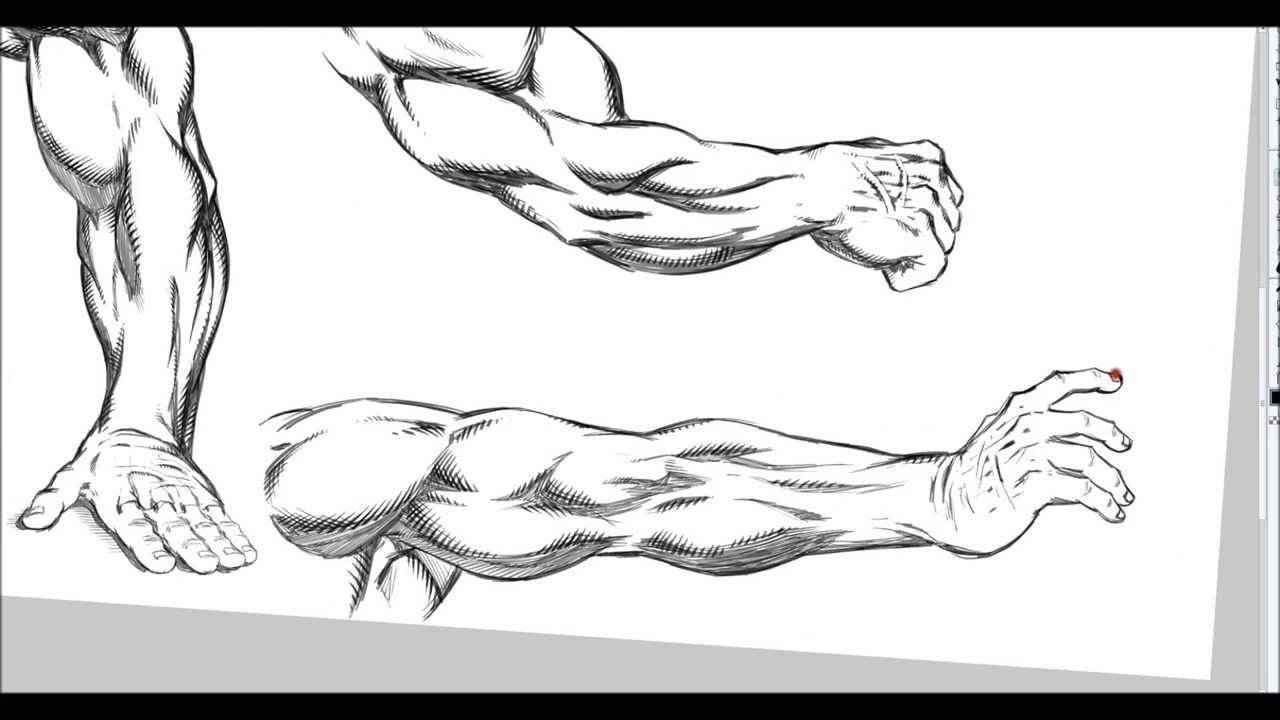 How I Practice Drawing Arm Muscles Video Youtube
