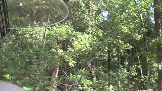 Squirrel - proof suet feeder