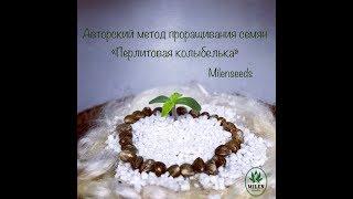 "Метод проращивания семян конопли ""ПЕРЛИТОВАЯ КОЛЫБЕЛЬКА"""
