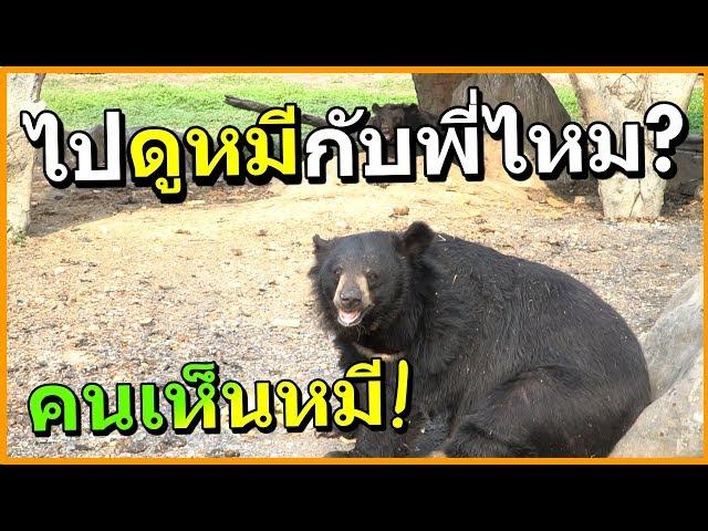 พาเพื่อนส่องสัตว์ ซาฟารี (เพื่อนอยากดูหมี)