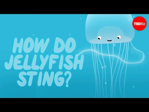 Thumbnail: How does a jellyfish sting? - Neosha S Kashef