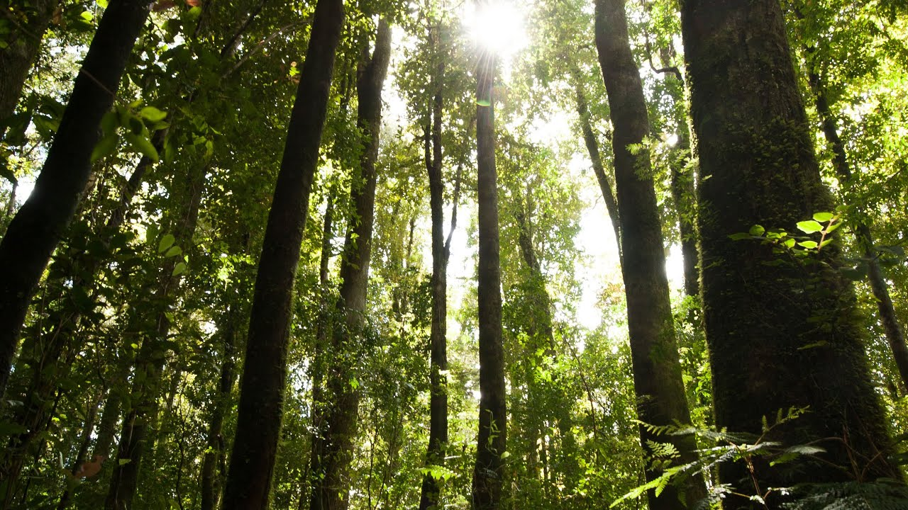 Carbon Sinks, Forests and Climate Change