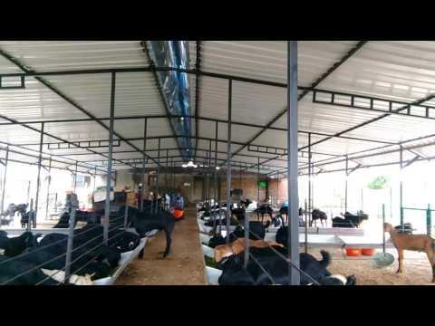 Udgir Ajwa Farm's