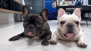 HOW I GROOM MY FRENCH BULLDOGS (WEEKLY GROOMING - Bath, Drying, Tear Stains, Ears, & Nails)
