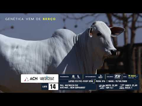 LOTE 14
