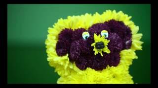 Доставка цветов и букетов по Киеву, Украине и миру. http://buket-express.ua/(, 2014-10-07T19:30:56.000Z)