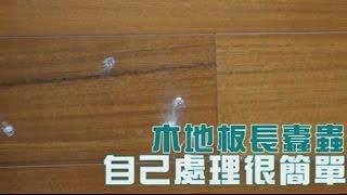 木地板長蠹蟲 自己DIY除蟲很簡單