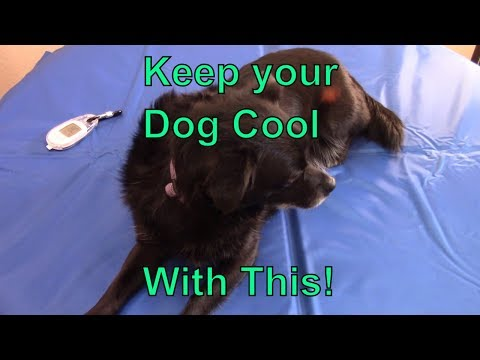 keep-your-dog-cool-with-a-whalek-cooling-bed-gel-mat!