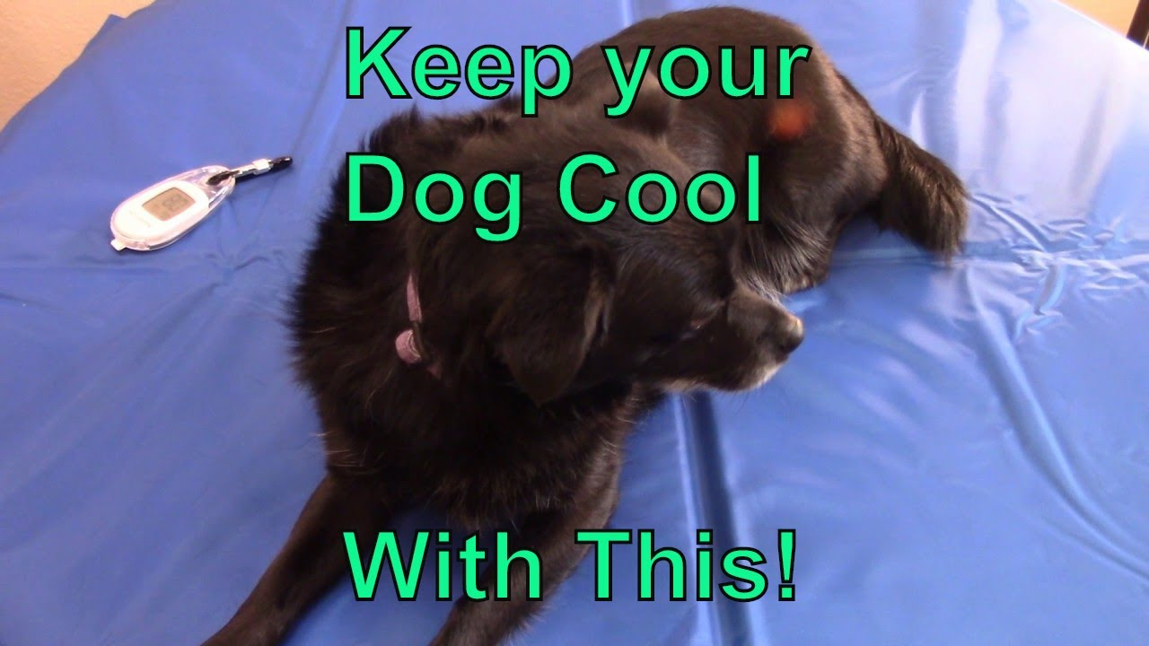 Keep Your Dog Cool With A Whalek Cooling Bed Gel Mat Youtube