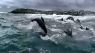 Gambar cover Shark Attack Backing Video