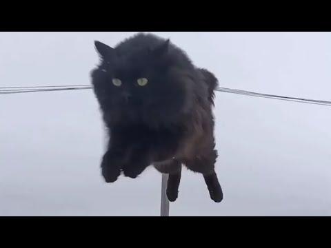 Пушинка и Чернуха деревенские умные кошки / village smart cats