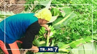 Jejak Si Gundul   Makassar 3 Kue Biji Nangka Nasu Galate Kue Baruasa Kepiting (20/10/16) 3 2