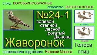 Жаворонок. полевой лесной степной рогатый. Голоса птиц