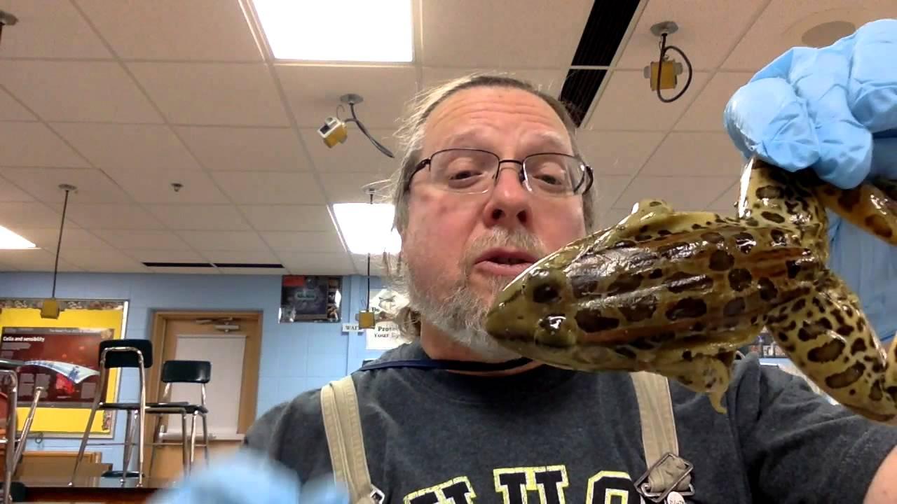Frog External Anatomy - YouTube