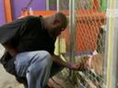 One Armed Dog Walker | Pit Bulls and Parolees