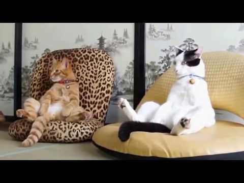 #ESSAYEZ DE NE PAS RIRE #11 - TOP Vidéos Drôle D'animaux ...