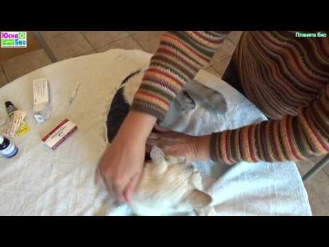 Кошка после стерилизации болеет